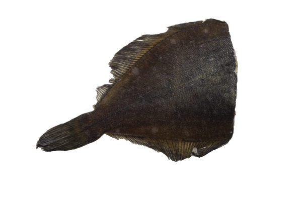 Камбала свежемороженая тушка-2